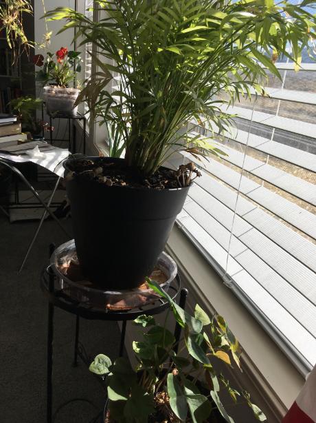 Some houseplants
